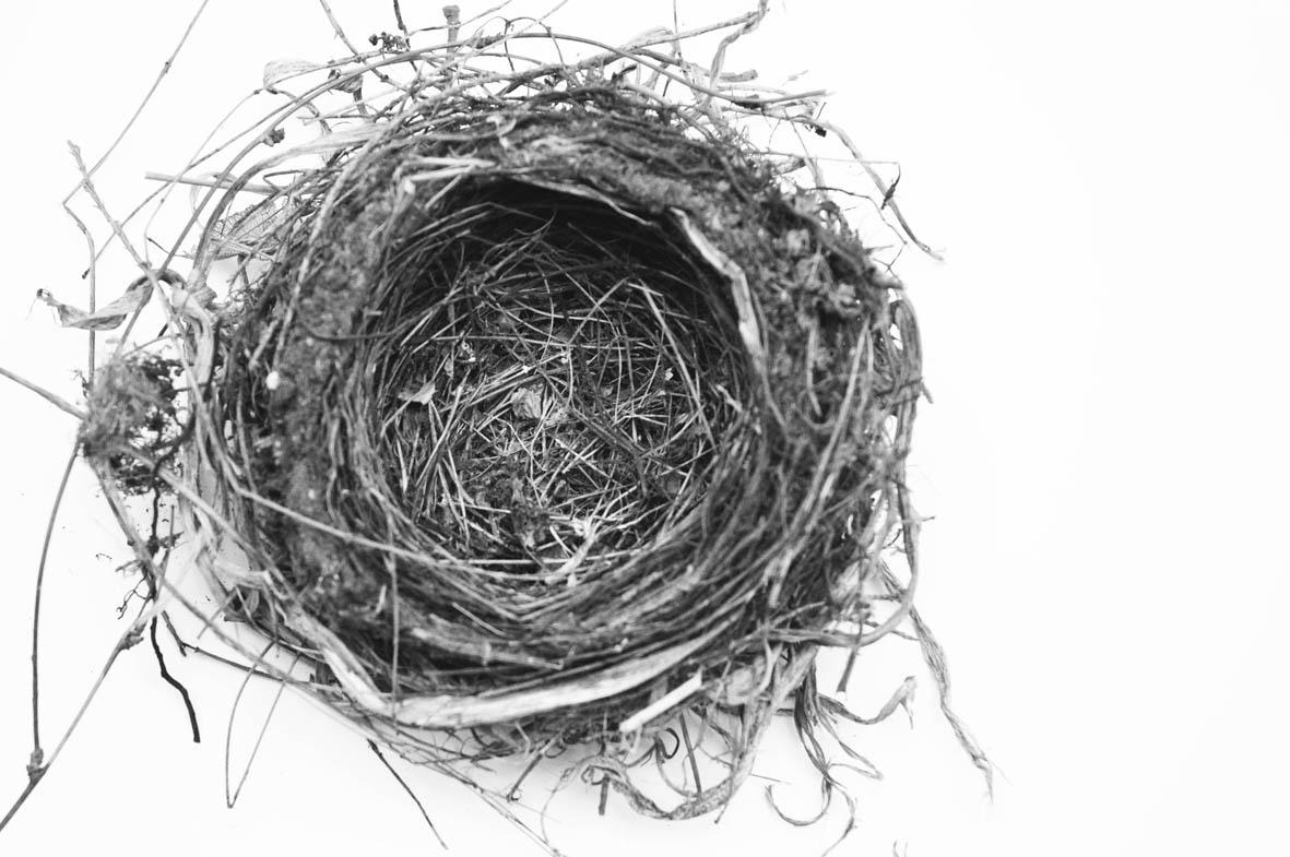 Nest sw